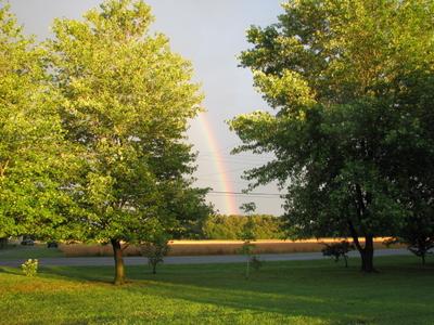 WEB Rainbow